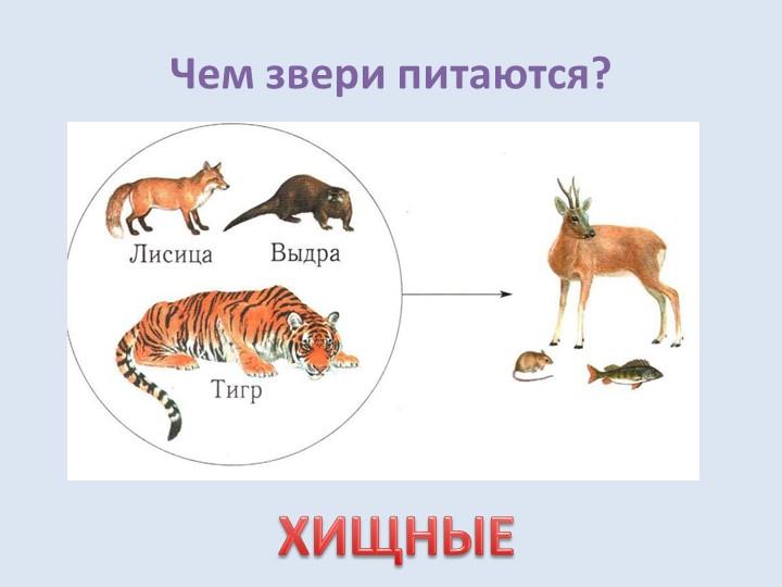 Чем звери питаются?ХИЩНЫЕ
