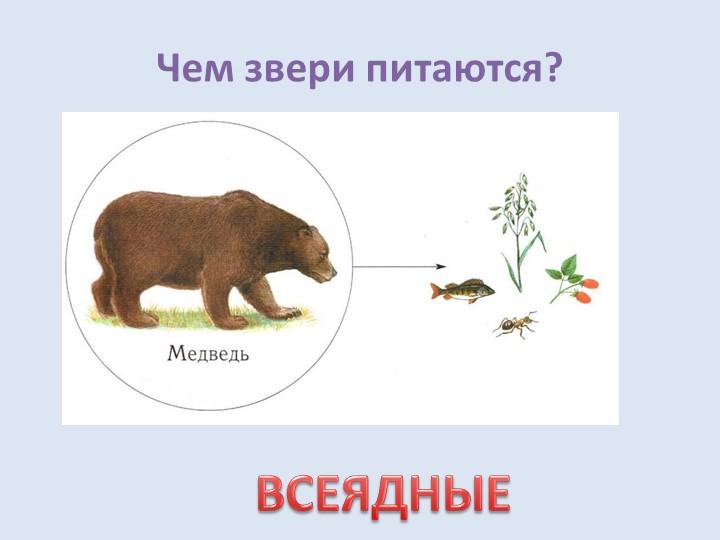 Чем звери питаются?ВСЕЯДНЫЕ