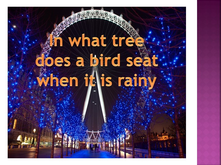 ?In what tree does a bird seat when it is rainy