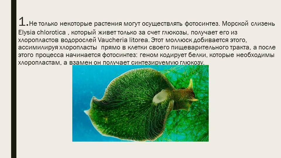 1.Не только некоторые растения могут осуществлять фотосинтез. Морской слизен...