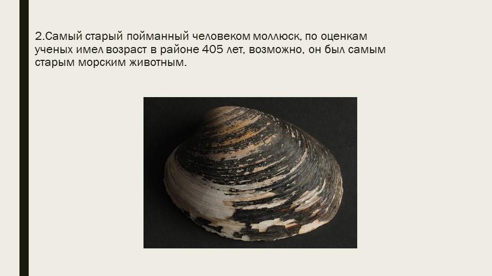 2.Самый старый пойманный человеком моллюск, по оценкам ученых имел возраст в...