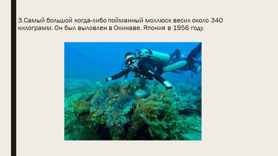 3.Самый большой когда-либо пойманный моллюск весил около 340 килограмм. Он бы...