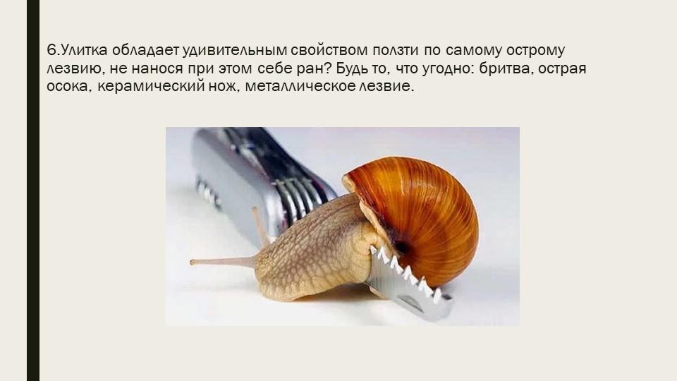 6.Улитка обладает удивительным свойством ползти по самому острому лезвию, не...