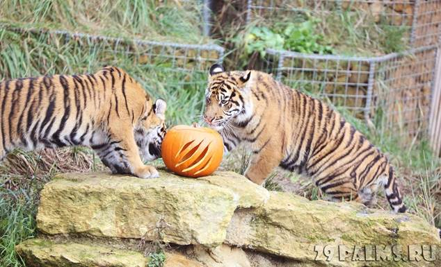 http://img.29palms.ru/photo/blog/animals/zoo/020417/1/resized/030_Blog_Pavla_Aksenova_Londonskiy_zoopark_(London_Zoo).jpg
