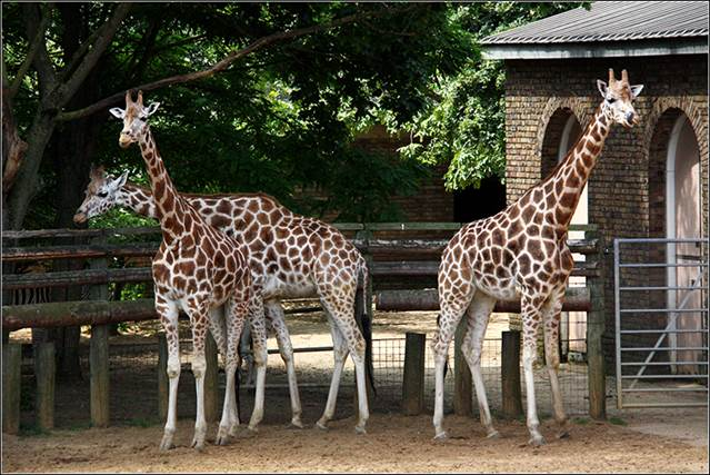 https://travels-online.ru/wp-content/uploads/2020/06/londonskij-zoopark.jpg