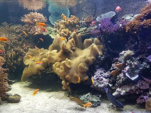 Лондонский Аквариум (London Aquarium Sea Life)