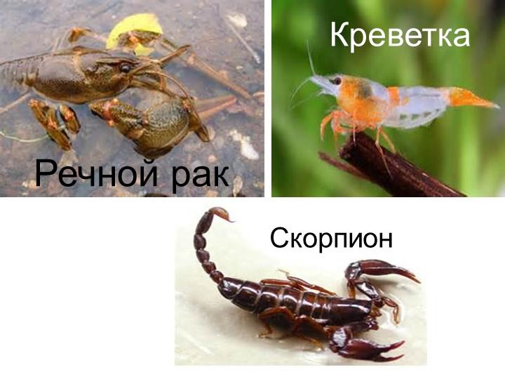 Речной ракКреветкаСкорпион