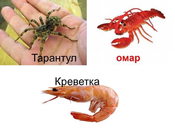 ТарантулКреветка