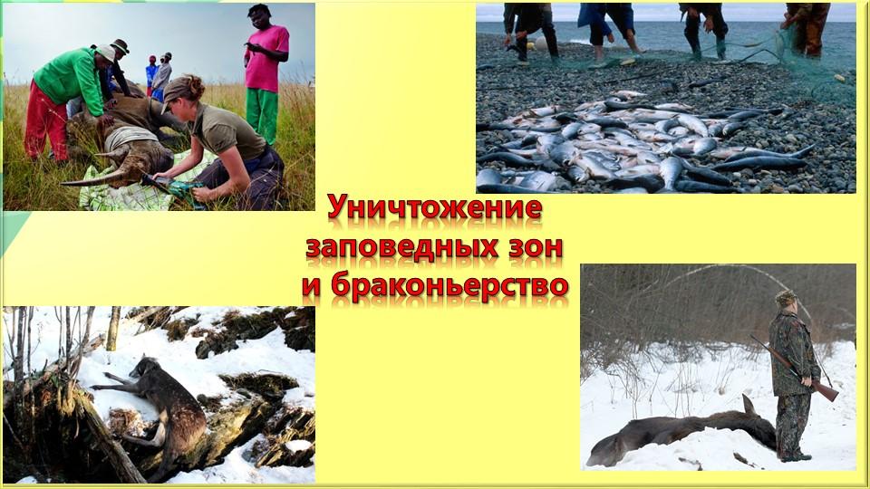 Уничтожение заповедных зон и браконьерство