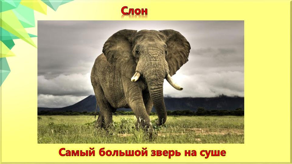 СлонСамый большой зверь на суше