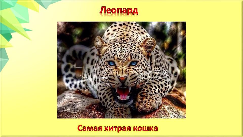 ЛеопардСамая хитрая кошка