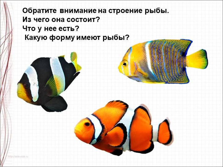 Обратите внимание на строение рыбы. Из чего она состоит? Что у нее есть? К...