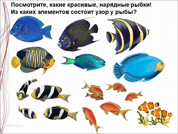 Посмотрите, какие красивые, нарядные рыбки!Из каких элементов состоит узор у...