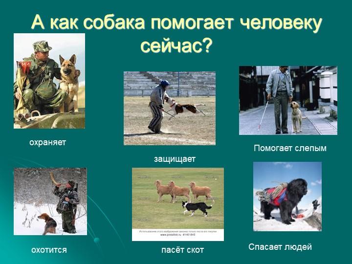 А как собака помогает человеку сейчас?охраняетохотитсяпасёт скотПомогает слеп...