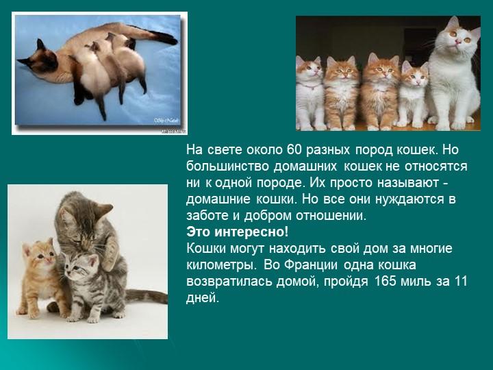 На свете около 60 разных пород кошек. Но большинство домашних кошек не относя...