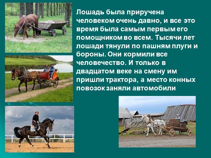Лошадь была приручена человеком очень давно, и все это время была самым первы...