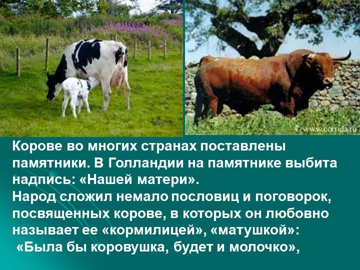 Корове во многих странах поставлены памятники. В Голландии на памятнике выбит...