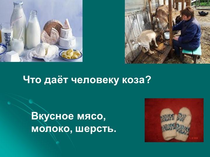 Что даёт человеку коза?Вкусное мясо, молоко, шерсть.
