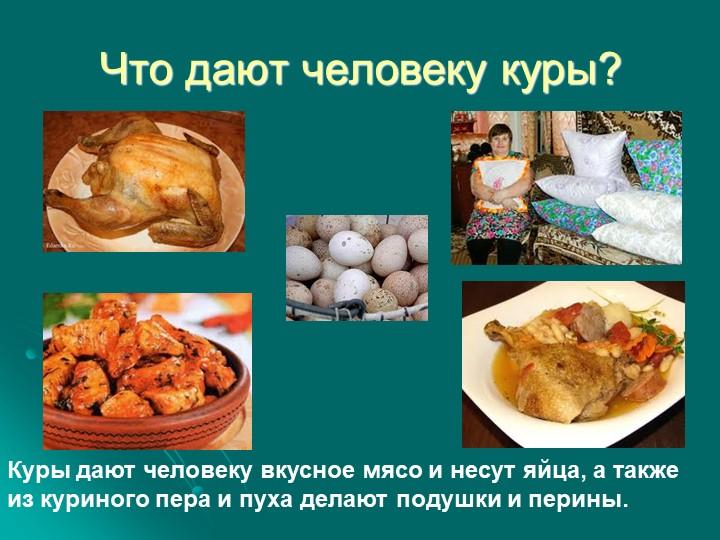 Что дают человеку куры?Куры дают человеку вкусное мясо и несут яйца, а также...