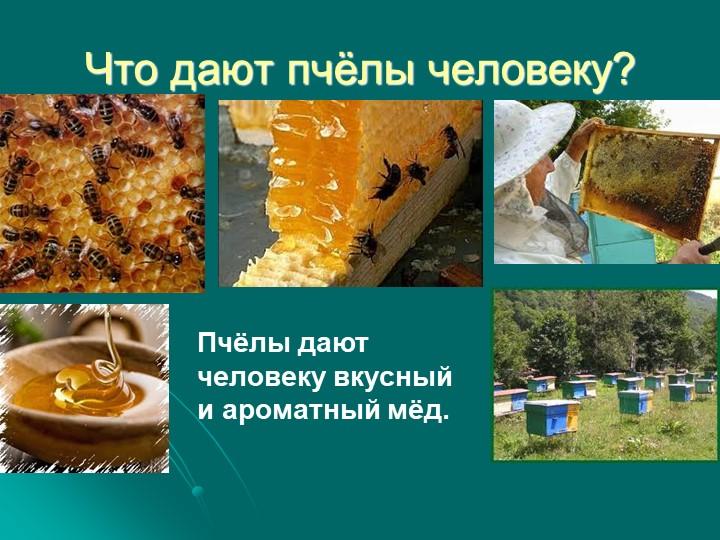 Что дают пчёлы человеку?Пчёлы дают человеку вкусный и ароматный мёд.