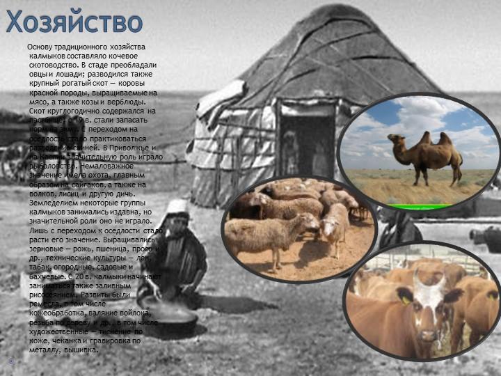 Хозяйство        Основу традиционного хозяйства калмыков составляло кочево...