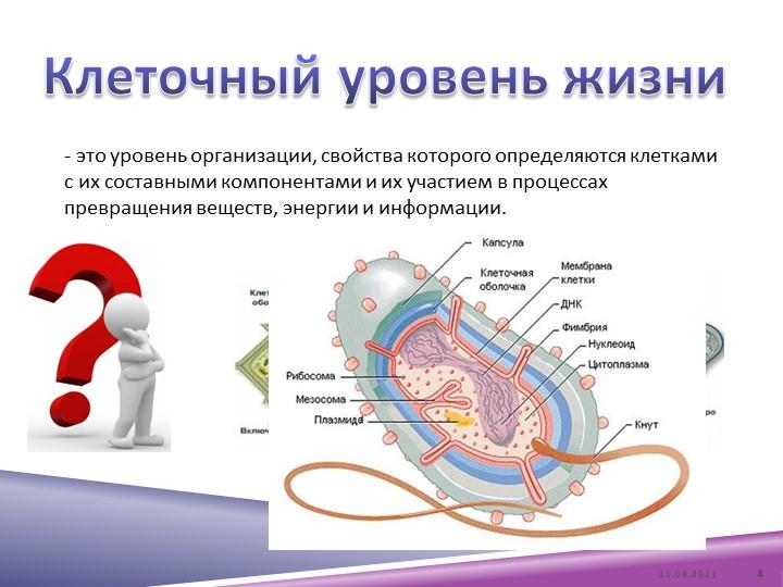 - это уровень организации, свойства которого определяются клетками с их соста...