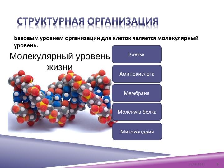 Структурная организацияБазовым уровнем организации для клеток является молеку...
