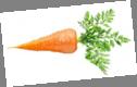 ᐈ Морковь рисунок фото, рисунки морковь | скачать на Depositphotos®