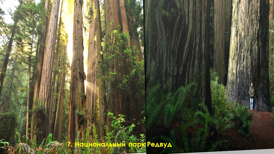7. Национальный парк Редвуд