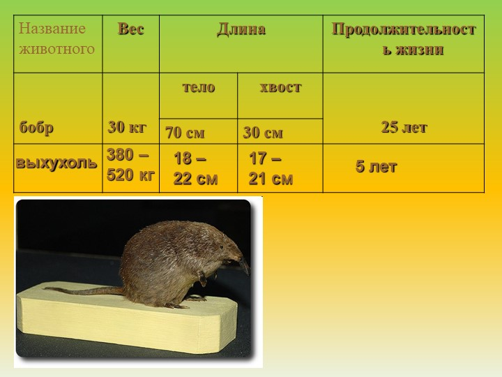выхухоль380 – 520 кг18 – 22 см17 – 21 см5 лет
