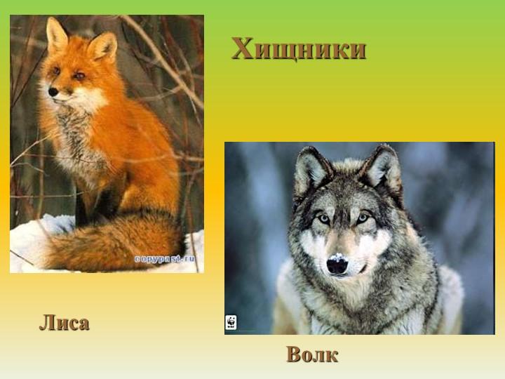 ХищникиЛиса Волк