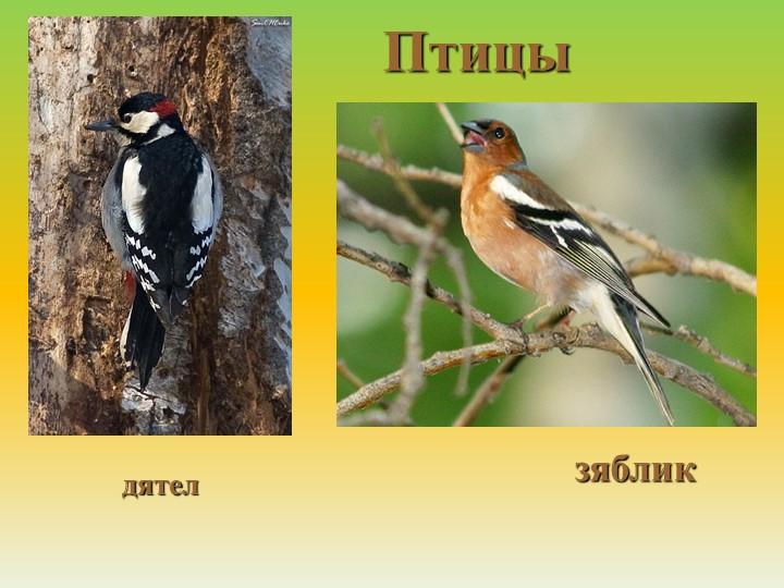 Птицыдятелзяблик