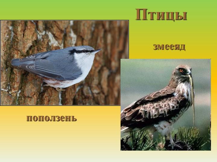 Птицыпоползеньзмееяд