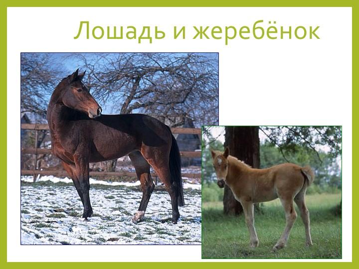 Лошадь и жеребёнок