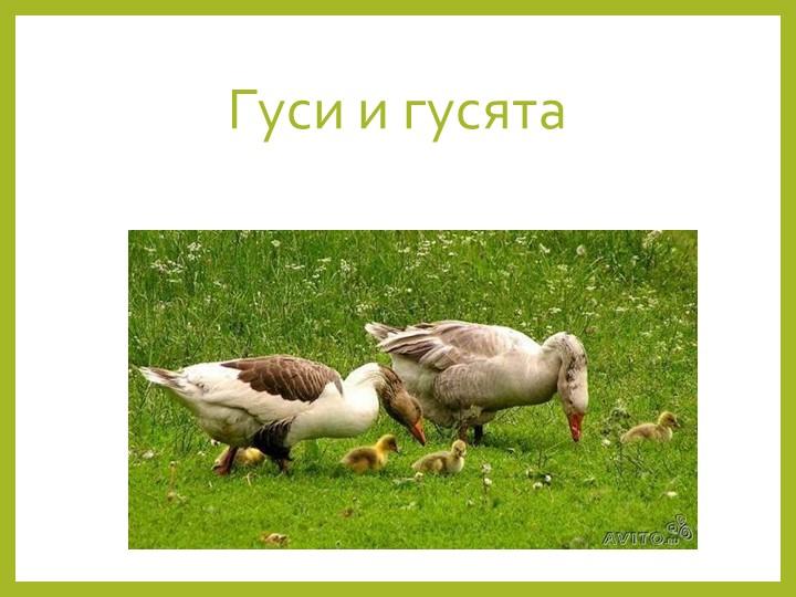 Гуси и гусята