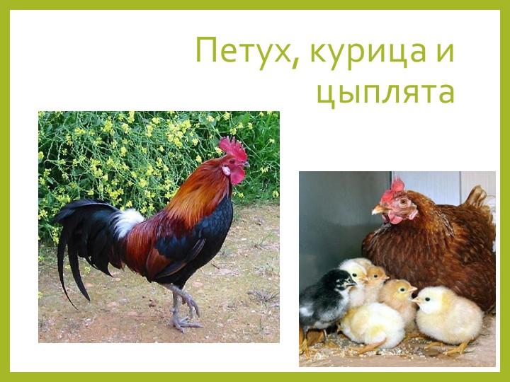 Петух, курица и цыплята