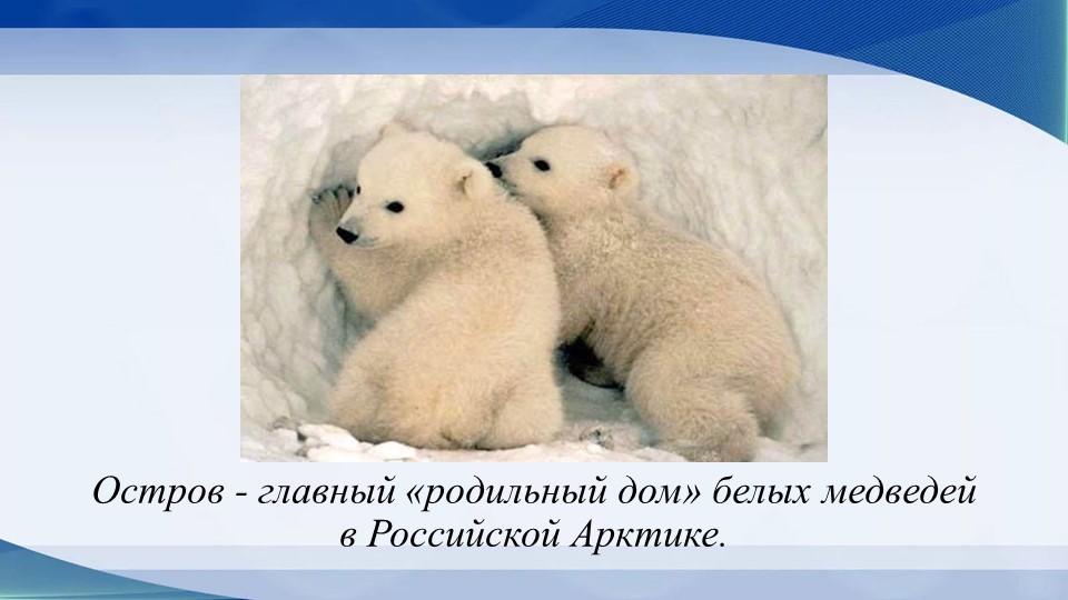 Остров - главный «родильный дом» белых медведей в Российской Арктике.
