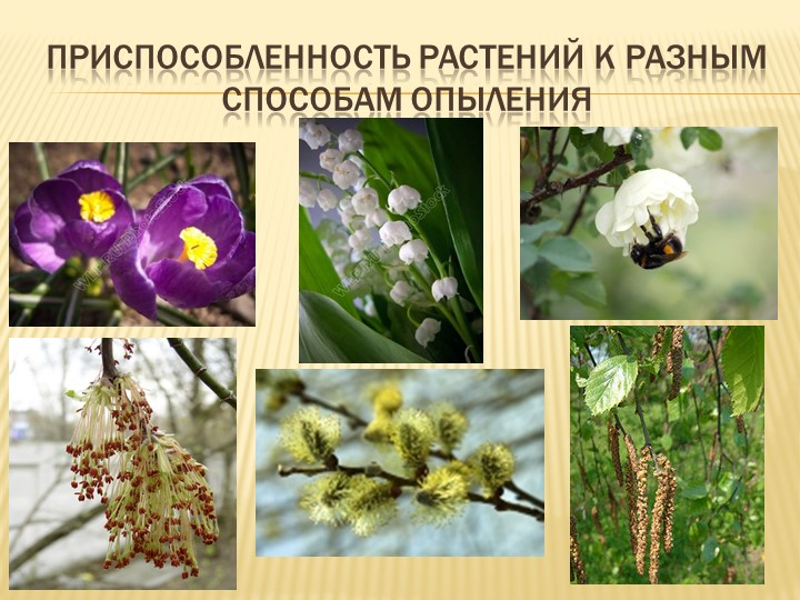Приспособленность растений к разным способам опыления