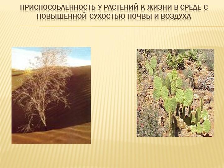 Приспособленность у растений к жизни в среде с повышенной сухостью почвы и во...