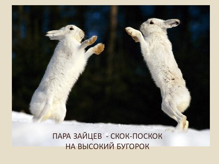 ПАРА ЗАЙЦЕВ  - СКОК-ПОСКОКНА ВЫСОКИЙ БУГОРОК