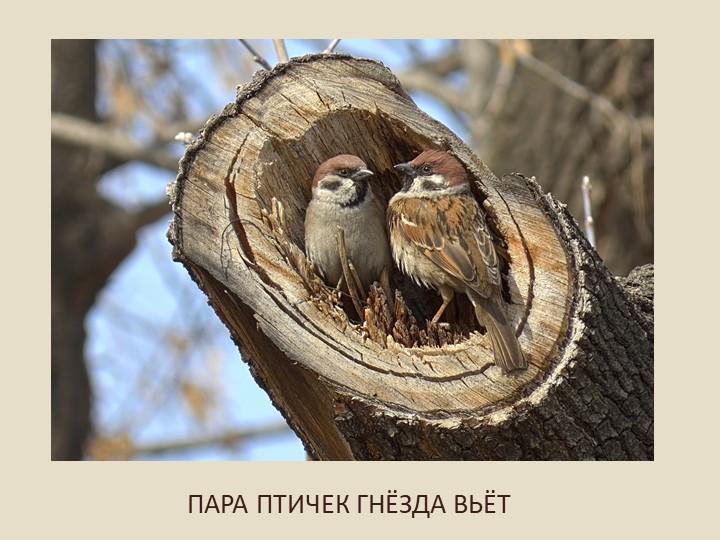ПАРА ПТИЧЕК ГНЁЗДА ВЬЁТ