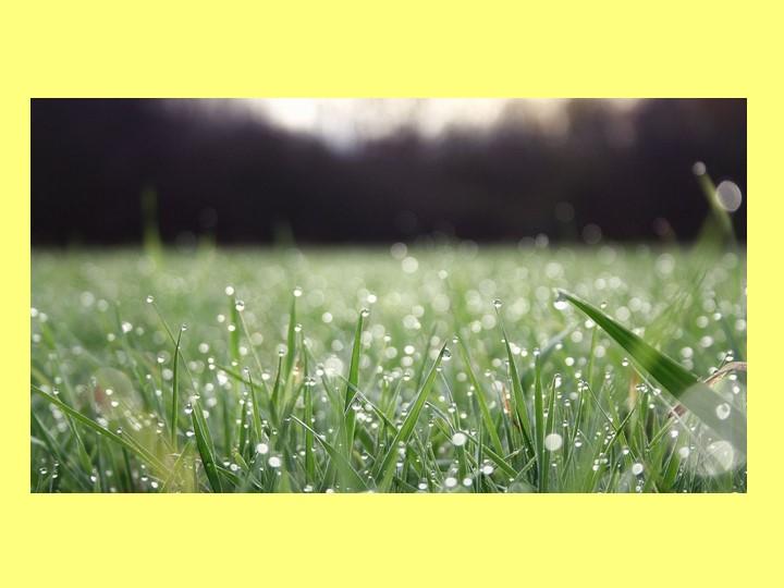 Утром бусы засверкали,Всю траву собой заткали.А пошли искать их днём,Ищем,...