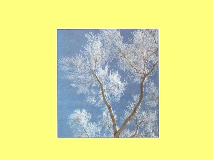 Не снег и не лёд,А в серебро деревья уберёт.