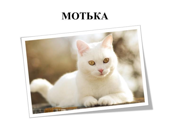 МОТЬКА