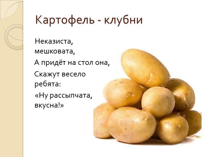 Картофель - клубни    Неказиста, мешковата,    А придёт на стол она,     Ск...