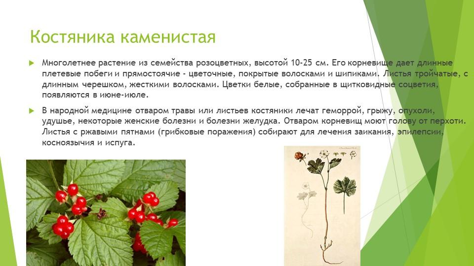 Костяника каменистаяМноголетнее растение из семейства розоцветных, высотой 10...