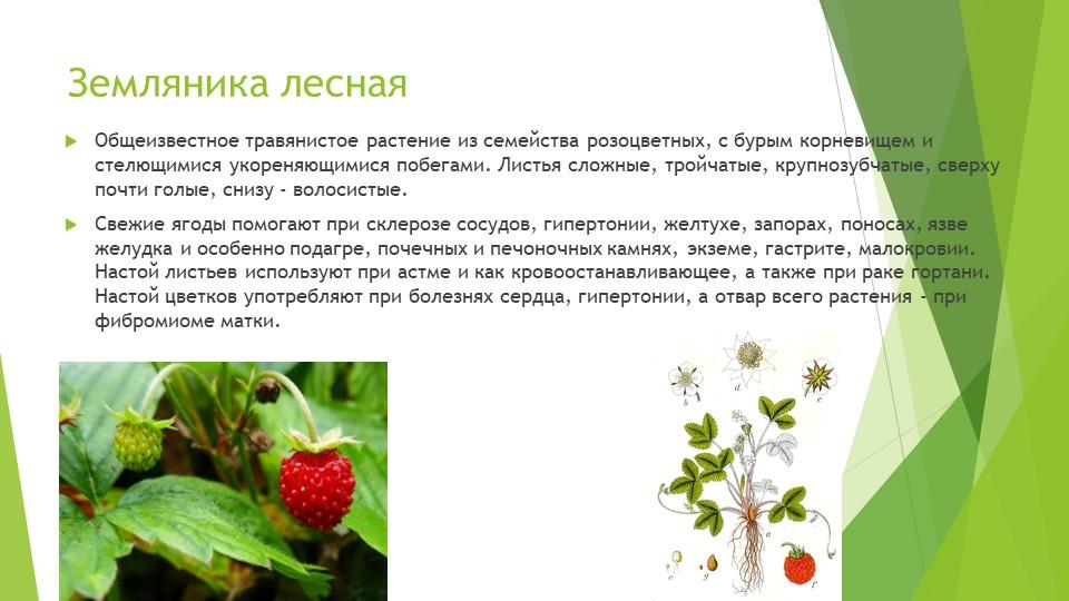 Земляника леснаяОбщеизвестное травянистое растение из семейства розоцветных,...