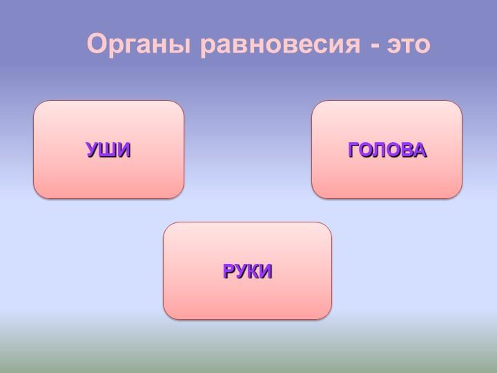 Органы равновесия - этоУШИРУКИГОЛОВА