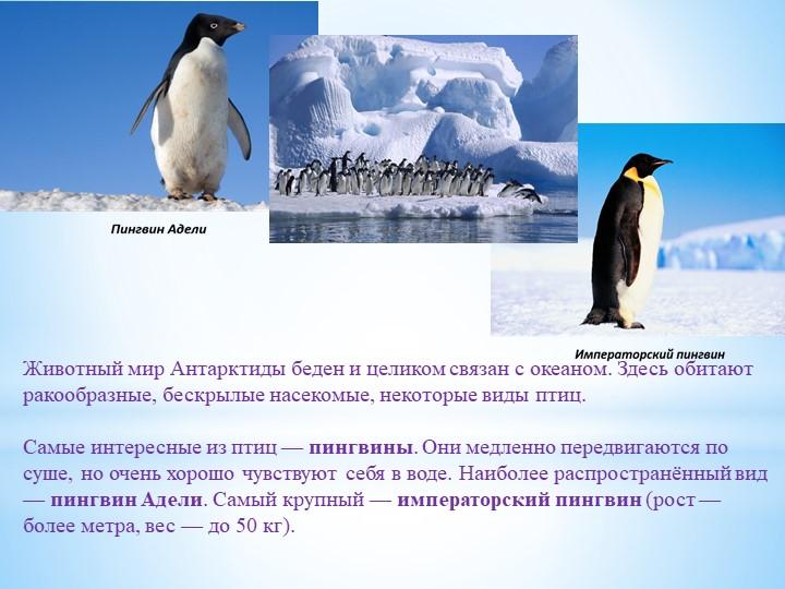 Животный мир Антарктиды беден и целиком связан с океаном. Здесь обитают ракоо...