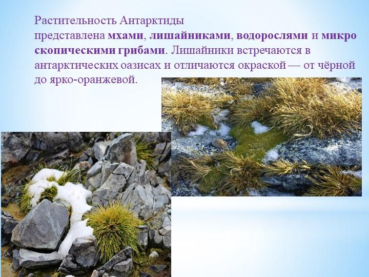 Растительность Антарктиды представленамхами,лишайниками,водорослямиимикр...